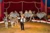 ROLINA – Das Circus-Event, mit der besonderen Note für die ganze Familie auf den 3 traditionellen Säulen des Circus: Tiere, Artistik & Clownerie